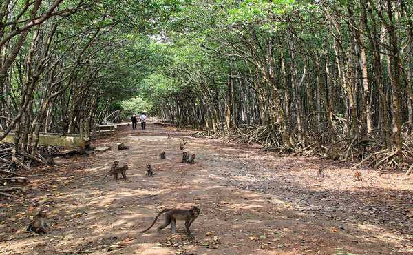 Đảo Khỉ
